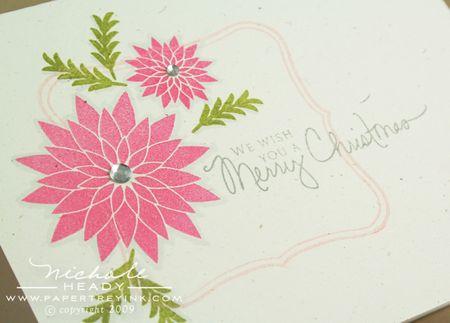 Poinsettia closeup
