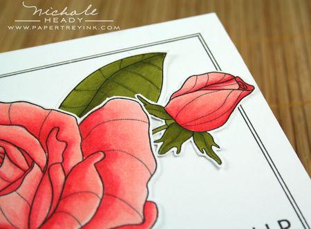 Rosebud closeup