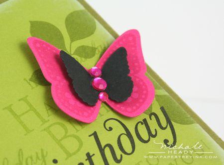 Butterfly closeupo
